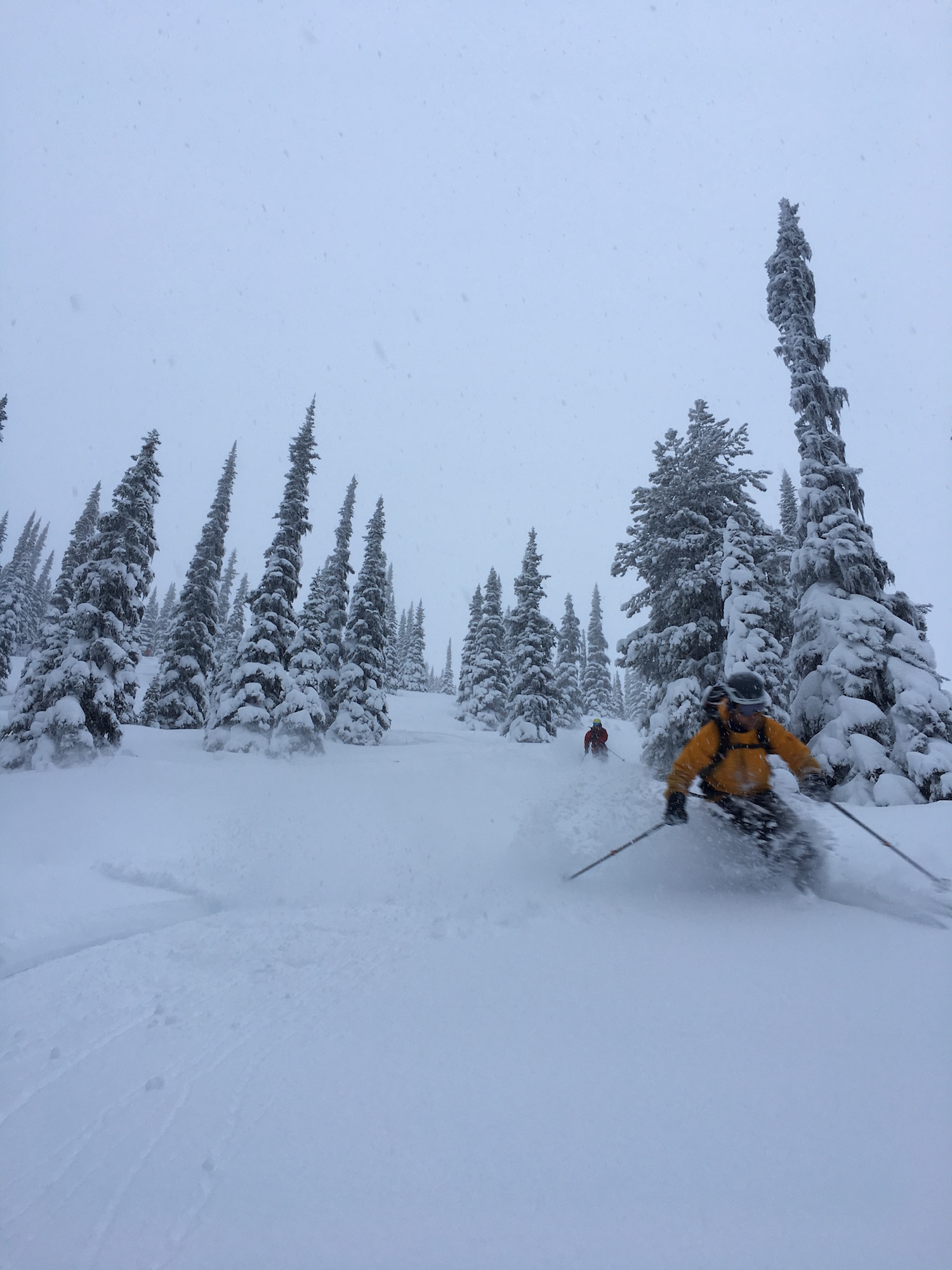 cariboo cat skiing valemount alicja gados photo