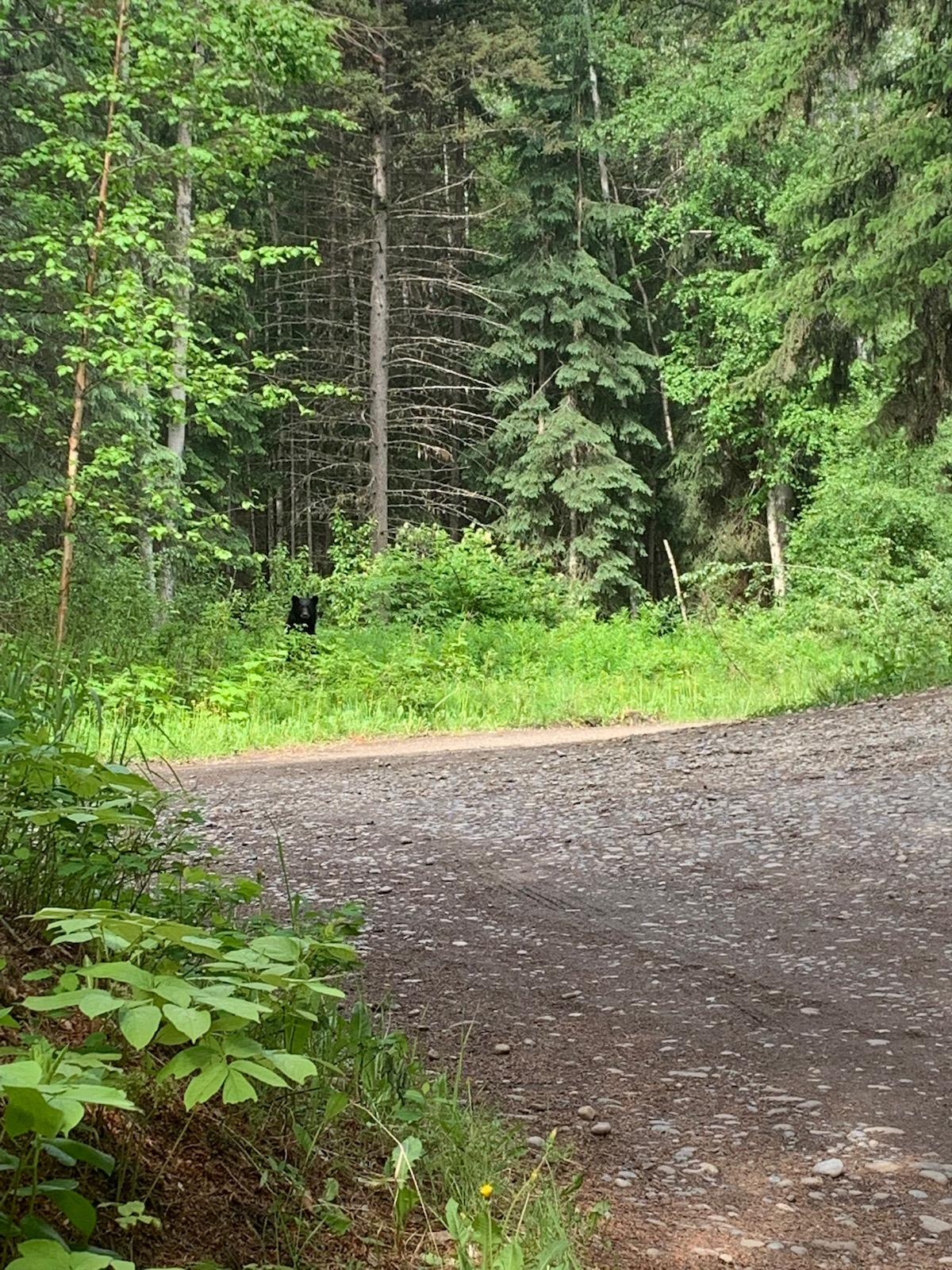 mount robson lodge campground bear